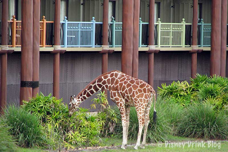 You'll enjoy watching animals such as giraffes and zebras right outside your balcony window.